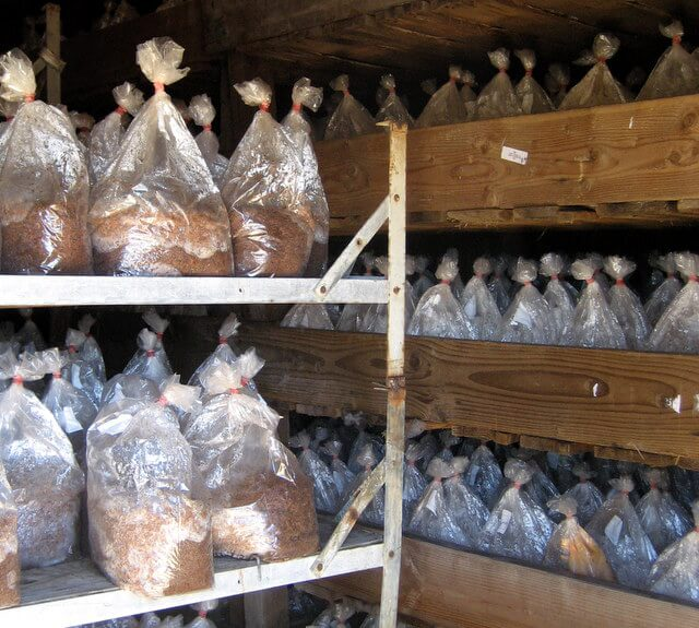 Incubation room at Far West Fungi mushroom farm