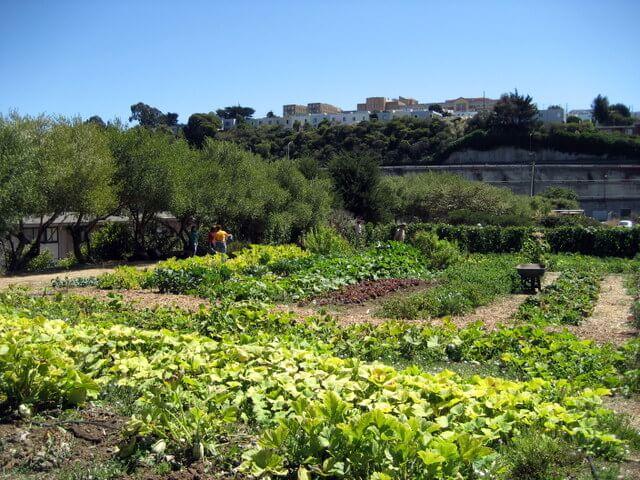 Alemany Farm in San Francisco