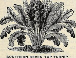 Southern Seven Top Turnip from Internet Archive Books on Flickr 14805010923_1d81bd1d75_o
