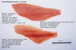 Red snapper fillets from FDA - UCM060669