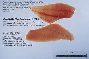 Rougheye Rockfish by W. Savary from FDA - UCM060653