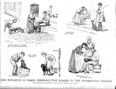 Drawings of dog groomers in Paris from 3/27/1898 New York Herald