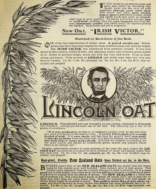 Ad for Lincoln Oat.