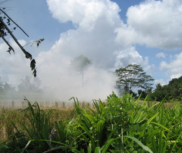 Burning the rice straw after harvest in Bali