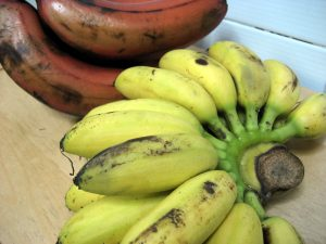 Pisang mas bananas (foreground), red bananas (background)