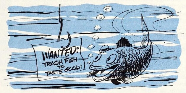 Trash fish image from University of North Carolina Sea Grant Program Newsletter, May, 1974