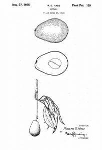 US Plant Patent 139 Hass Avocado
