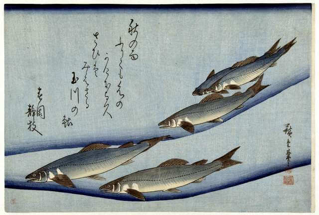 8 Japanese Woodblock Fish Prints Ando Hiroshige from Shoal of Fishes Pictures