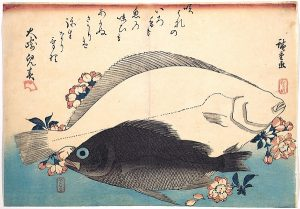 Hiroshige woodblock print - Hirame and Mebaru Fish with Cherry Blossoms, from the series Uozukushi DP123589
