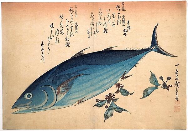 Hiroshige woodblock print - Katsuo Fish with Cherry Buds, from the series Uozukushi DP123578