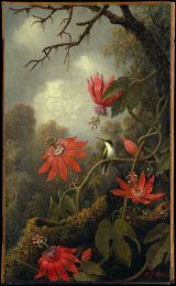 Heade - Hummingbird and passionflowers DT2080 from the Metropolitan Museum of Art