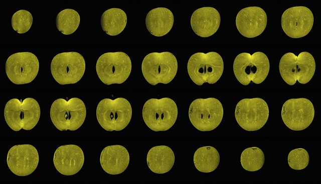 Slices of a apple in an MRI by Alexandr Khrapichev, University of Oxford, from Wellcome Collection