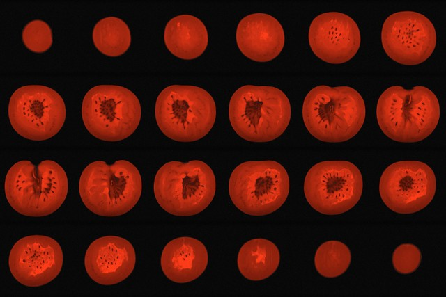 Slices of a tomato in an MRI by Alexandr Khrapichev, University of Oxford, from Wellcome Collection