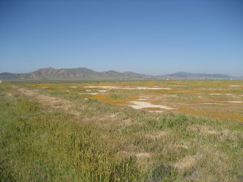 The northern part of the Carrizo Plain in central California