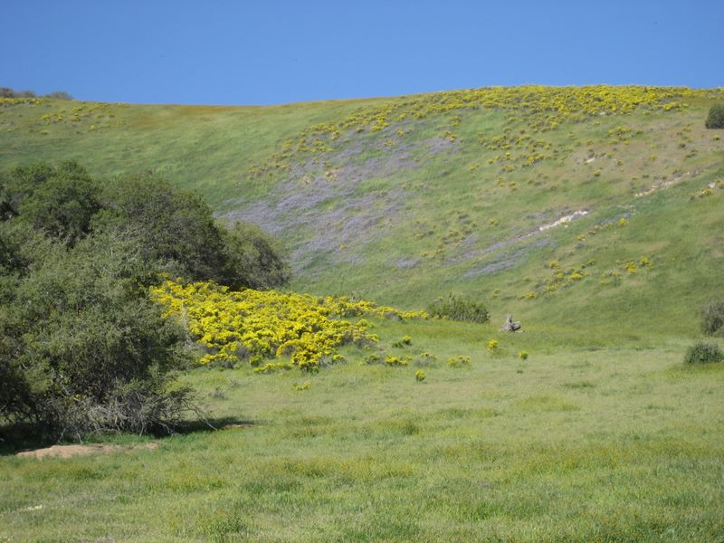 Wildflowers on hillside along California Highway 58
